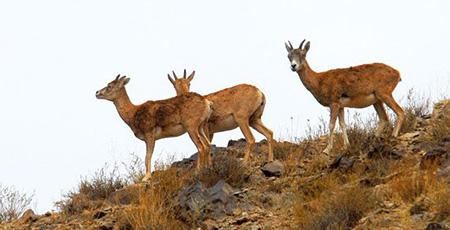 پارک ملی تنگه صیاد، در 15 کیلومتری شهرستان شهرکرد قرار دارد